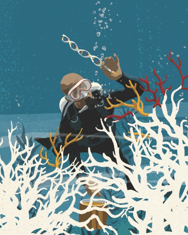 Illustration of a researcher studying coral in the ocean. / Mark Smith illustration