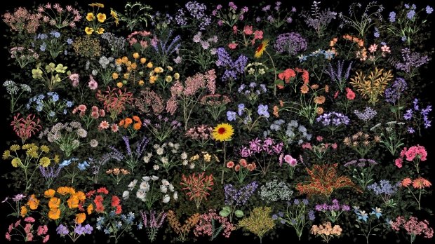 A video installation of flowers representing those found at Stanford University.