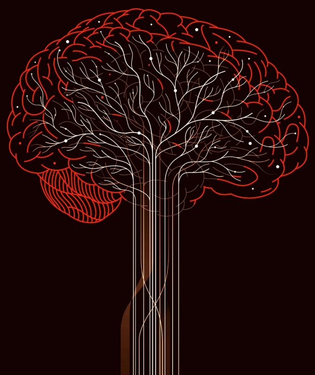 Illustration of a brain by Harry Campbell